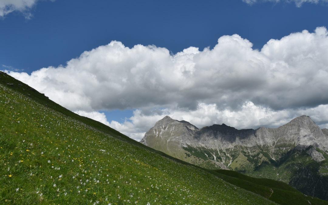 Monte Nona – Monte Croce (Stazzema)